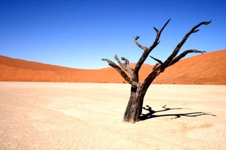 padang pasir pohon meranggas