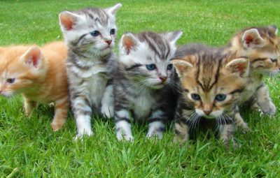 kittens-cat-cat-puppy-rush-45170